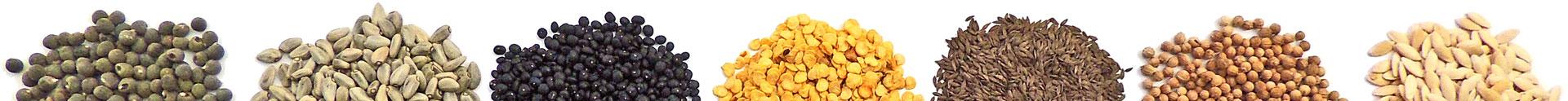 crop seeds