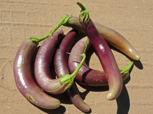 Lomg Purple