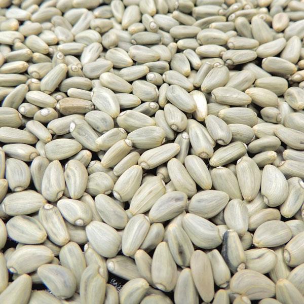 artichoke seed