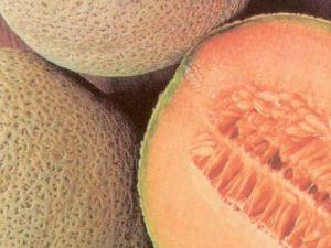 Melon Topmark